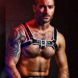 Shoulder Harness/ring hook...